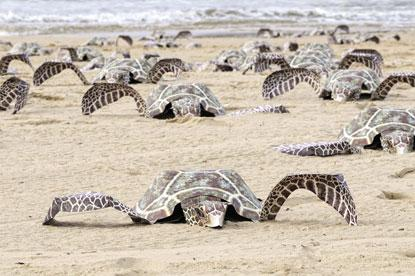 cardboard_sea_turtles_beach