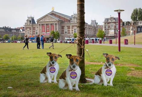 hondjes_museumplein_181799b